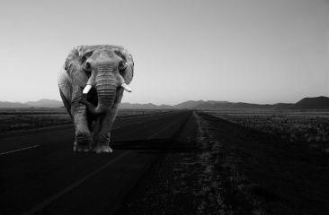 photography road blackandwhite manipulation