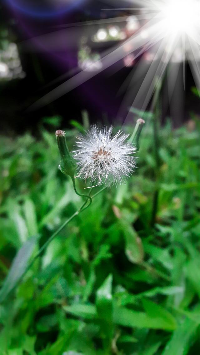 Heloo 😘#flowers #flowerpower #flowerporn #floweroftheday #macrophotography #macrophoto #photooftheday