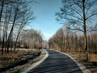 road forest nature travel tree freetoedit