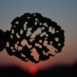 freetoedit sunsetsilhouette sunsetphotography naturephotography outside dpcsunset pcleavesisee