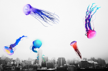 freetoedit surreality jellyfish
