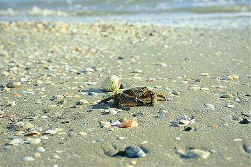 beach beachphotography sea water