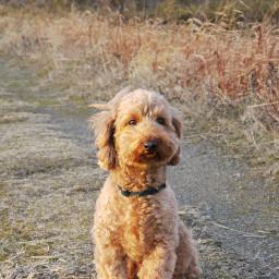 freetoedit cute mydog