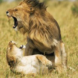 uiii animals naturephotography familylove