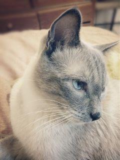 cats petsandanimals pets