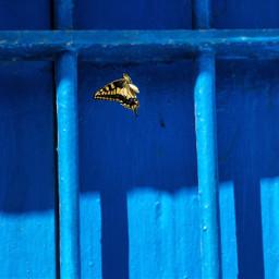 yellow blue butterfly window contrast