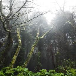 beautiful nature photographynature amazing fog