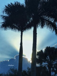 sunrays palmtrees silhouette nature photography