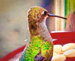 dpcallaboutbirds