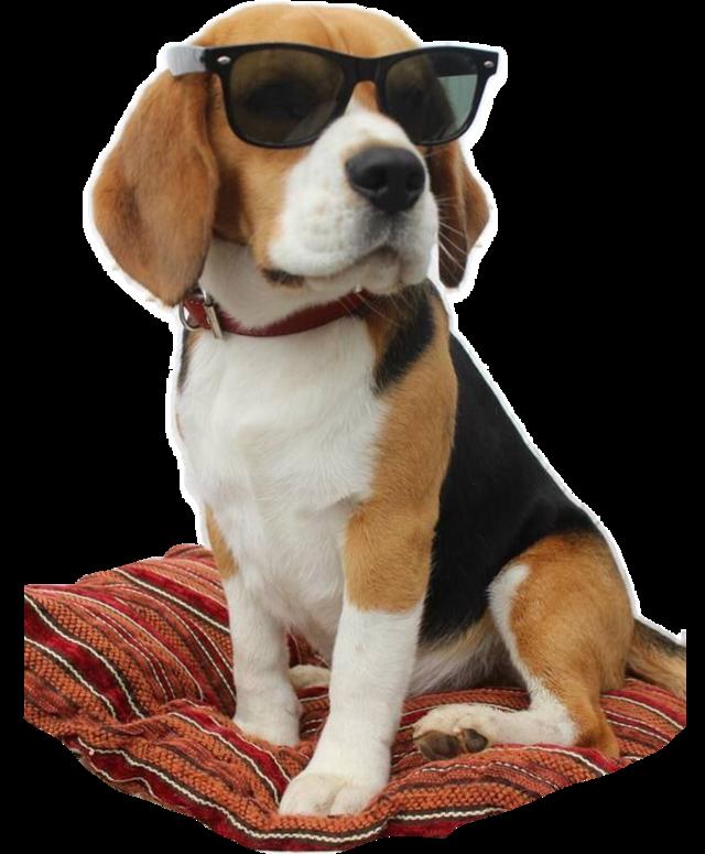 #FreeToEdit #ftestickers #dog