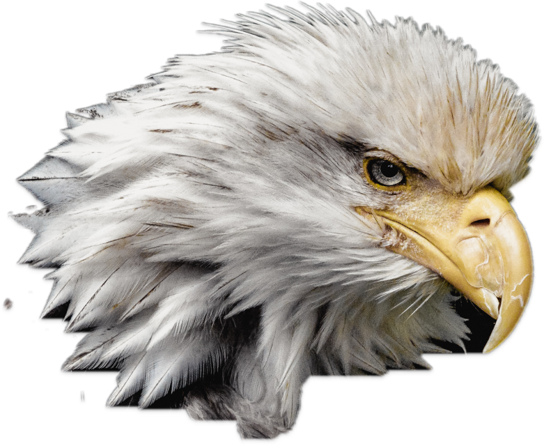 #FreeToEdit #ftestickers #eagle