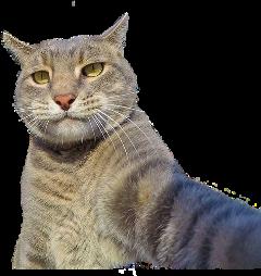 cat stickers boss selfie