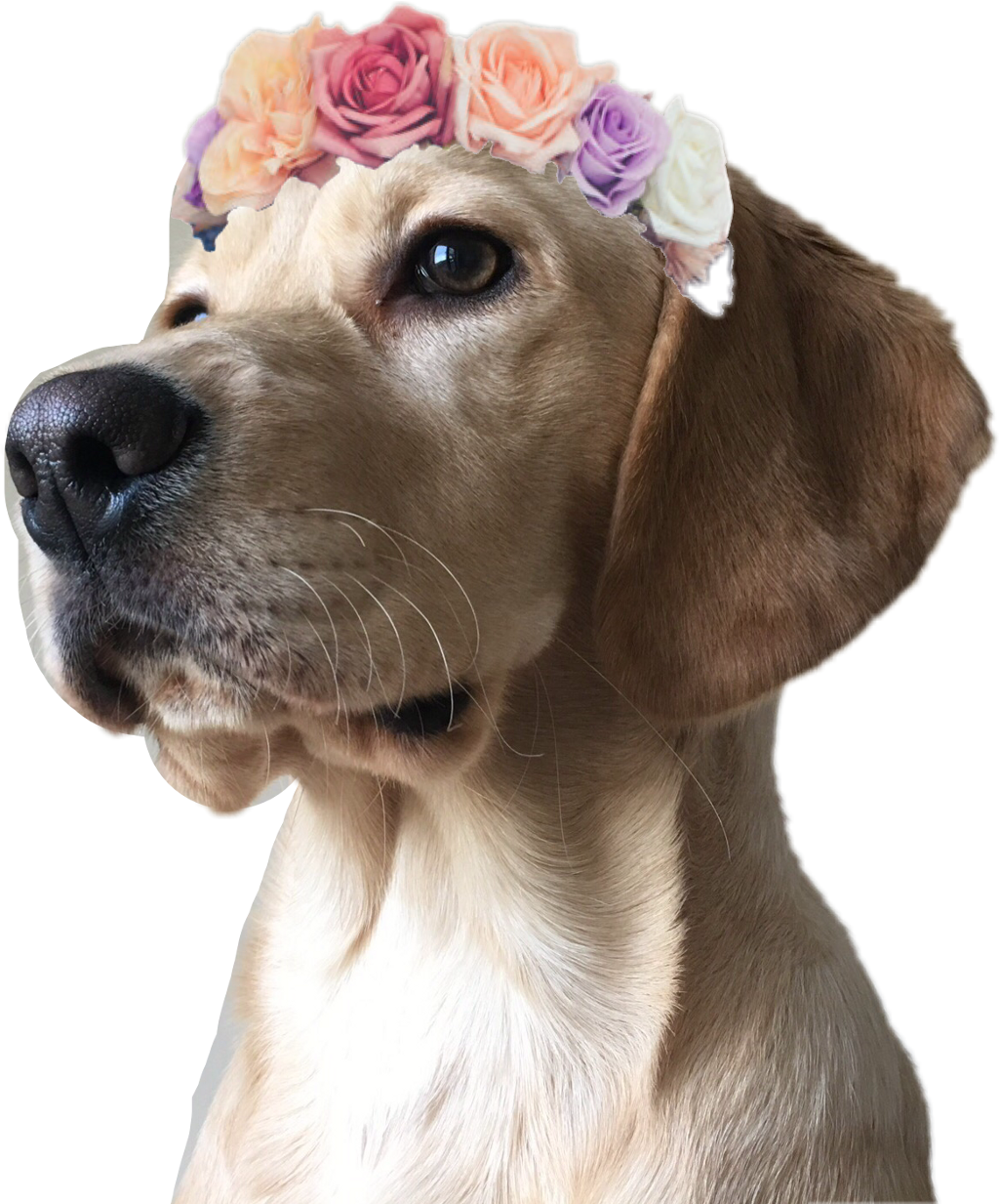 #dog #flowercrown