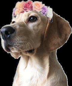 dog flowercrown