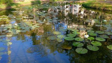morning garden nature parimal ahmedabad