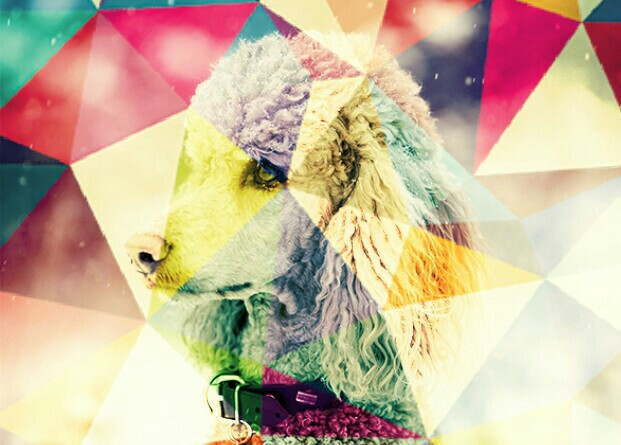 #FreeToEdit #adobephotoshop #dog #poodle #color #edited