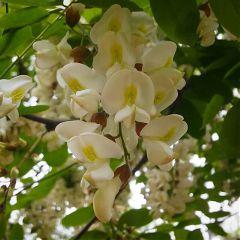 treeflowers nature plants flowers