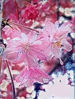 flowerful photoart